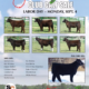 Show Cattle Travels!!!