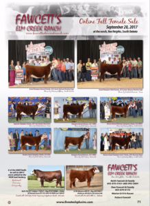 Fawcett's Online Fall Female Sale @ Ree Heights | South Dakota | United States