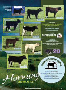 Hornung Show Cattle Online Sale