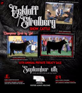 Eckloff/Strolberg Show Cattle Sale