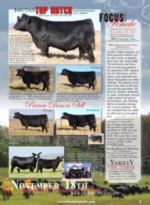 Focus on the Female @ Yardley Cattle Company | Beaver | Utah | United States