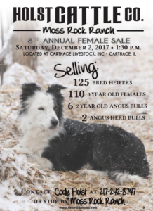 Holst Cattle Co. 8th Annual Female Sale @ Carthage Livestock, INC | Carthage | Illinois | United States