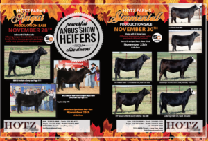 Hotz Farms Angus Production Sale @ SC Online Sales