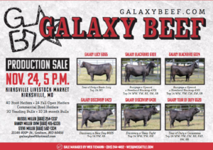 Galaxy Beef Production Sale @ Kirksville Livestock Market | Kirksville | Missouri | United States