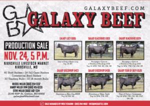 Galaxy Beef Production Sale @ Kirksville Livestock Market | Kirksville | Missouri | United States