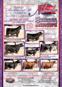 Platinum Standard Female Sale @ Trauernicht Simmentals | Beatrice | Nebraska | United States