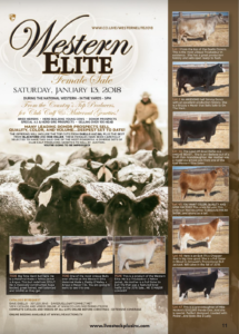 Western Elite Female Sale @ In the yards | Denver | Colorado | United States