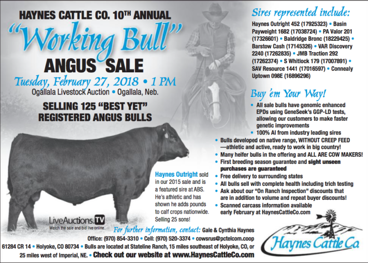 Haynes Cattle Co  10th Annual Working Bull Angus Sale