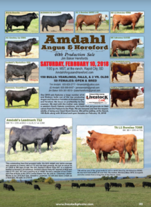 Amdahl Angus & Hereford 40th Production Sale @ At the Ranch | Rapid City | South Dakota | United States