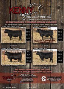 Kenny Angus Bull & Select Female Sale @ Kenny Angus Ranch | Odebolt | Iowa | United States