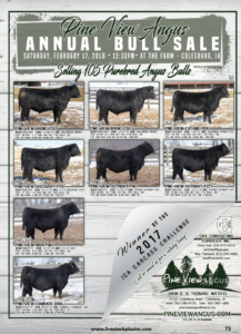Pine View Angus Annual Bull Sale @ At the farm | Colesburg | Iowa | United States