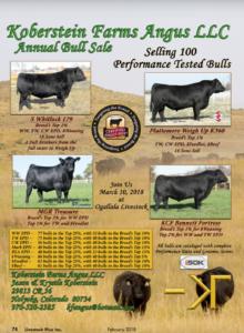Koberstein Farms Annual Bull Sale @ Ogallala Livestock | Holyoke | Colorado | United States