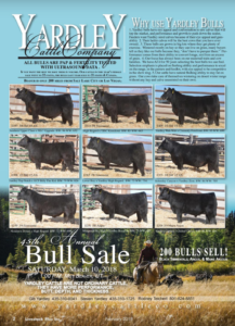 Yardley Cattle Company Annual Bull Sale @ Yardley Cattle Company | Beaver | Utah | United States