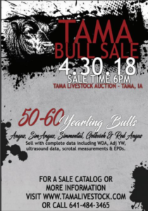 TAMA Bull Sale @ Tama Livestock Auction | Tama | Iowa | United States