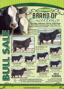 Felt Farms Brand of Excellence @ West Point Livestock Auction | West Point | Nebraska | United States