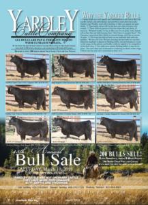 Yardley Cattle Company Annual Bull Sale @ On Farm | Beaver | Utah | United States