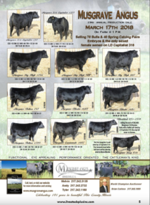 Musgrave Angus Annual Production Sale @ On Farm