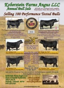 Koberstein Farms Angus Annual Bull Sale @ Ogallala Livestock