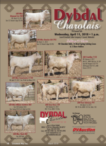 Dybdal Charolais 7th Annual Sale @ Laurel Livestock Sales Company | Laurel | Nebraska | United States