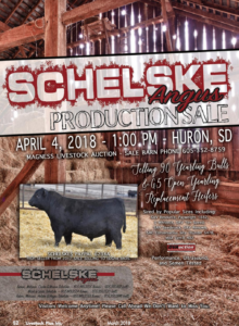 Schelske Angus Production Sale @ Magness Livestock Auction | Huron | South Dakota | United States