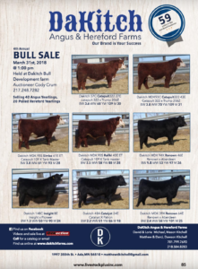 DaKitch Angus & Hereford Farms Bull Sale @ Dakitch Bull Development Farm