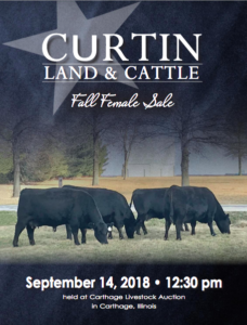 Curtain Land & Cattle Fall Female Sale @ Carthage Livestock Auction | Carthage | Illinois | United States