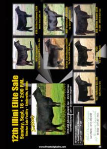 Illini Elite Sale @ Rincker Sale Facility | Shelbyville | Indiana | United States