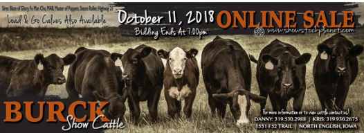 Burck Show Cattle Online Sale on 10/11/18
