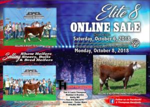 Elite 8 Online Sale