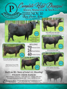 Polson Creek Ranch Complete Herd Dispersal @ Bagley Livestock Auction | Bagley | Minnesota | United States