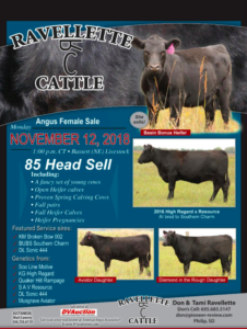 Ravellette Cattle Angus Female Sale @ Bassett Livestock | Bassett | Nebraska | United States